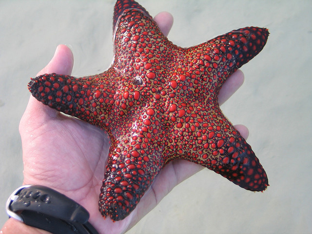 160511-starfish_David Quitoriano
